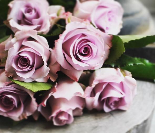 Enchanting Lavender Roses